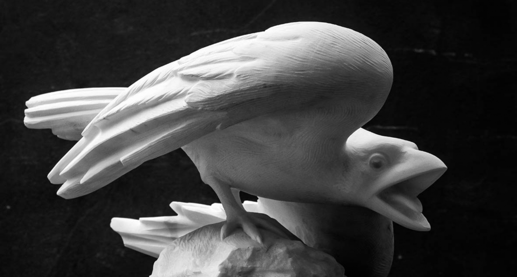 Corvo Bianco